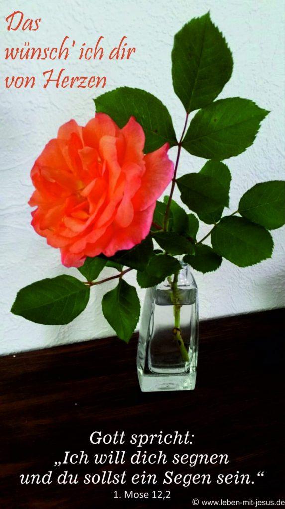 e-cards Anlässe-Rose in Vase