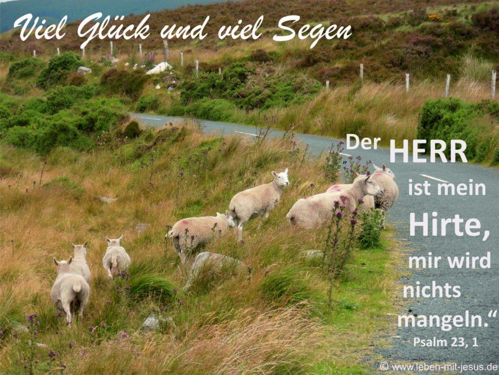 e-cards Anlässe-Schafe an der Straße