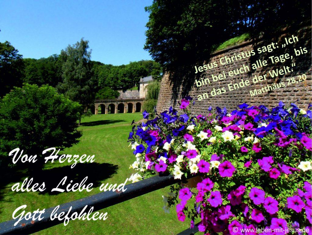 e-cards Anlässe-Sommerblumen an einer Mauer