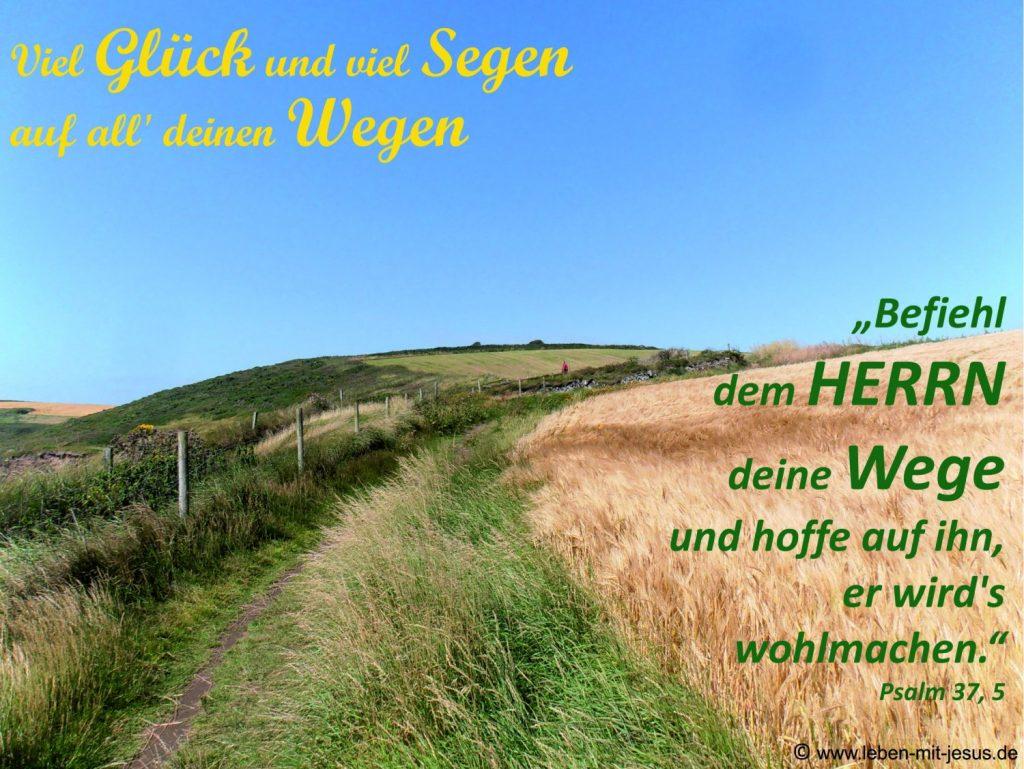 e-cards Anlässe-Weg in Kornfeldern