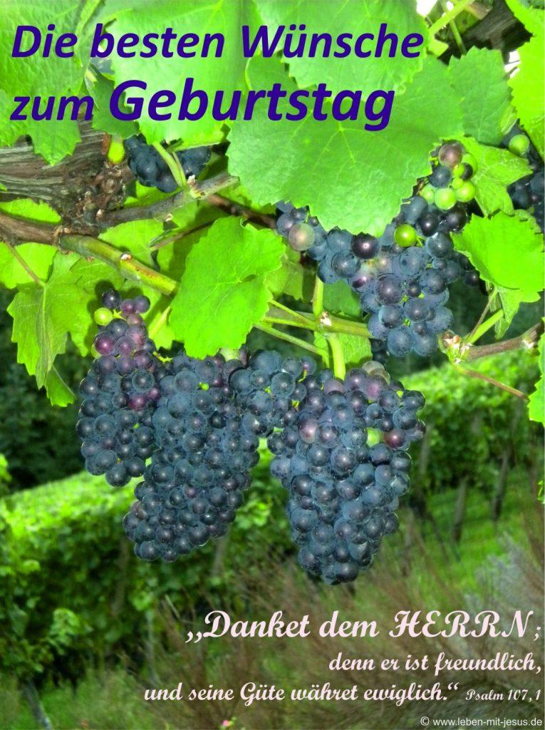 e-cards Geburtstag-Weinrebe